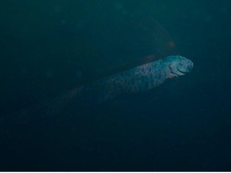 Pez remo gigante: hábitat y características