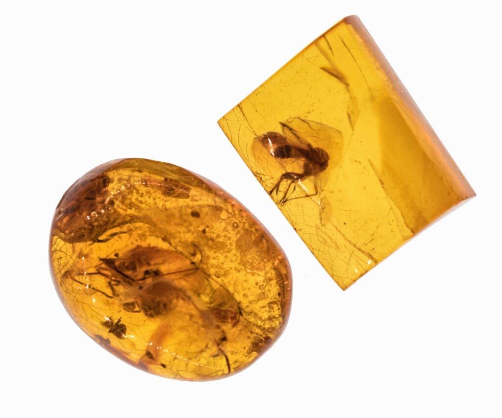 La hormiga del infierno: un insecto extinto