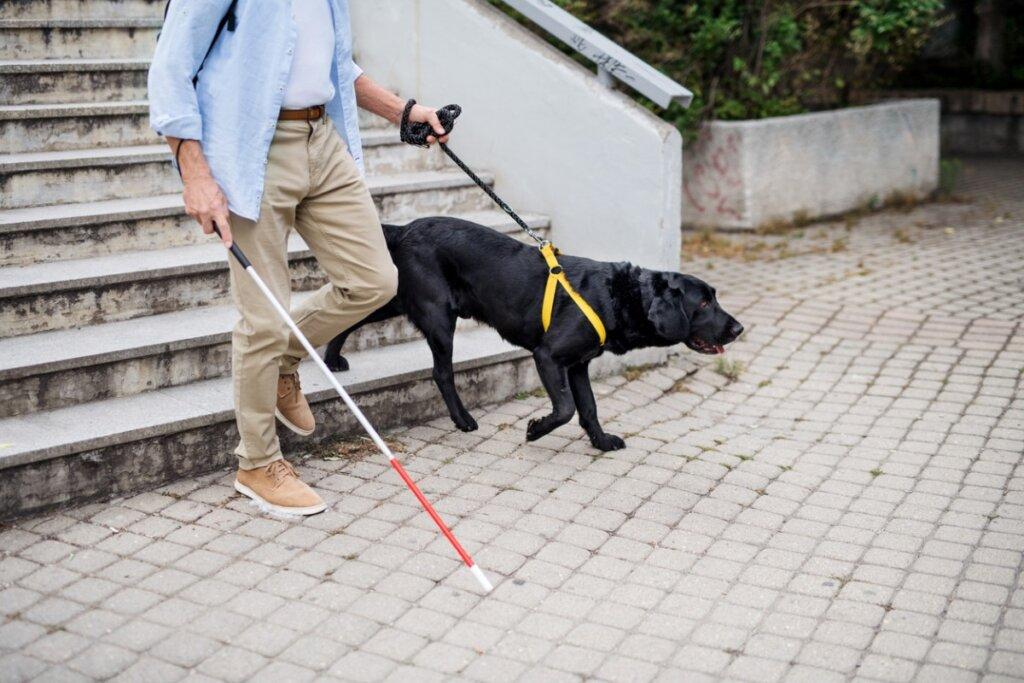 Entrenamiento de perros guía: ¿cómo hacerlo?