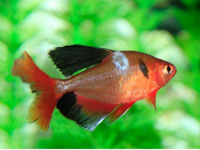 Hongos en peces: tipos, síntomas y tratamientos