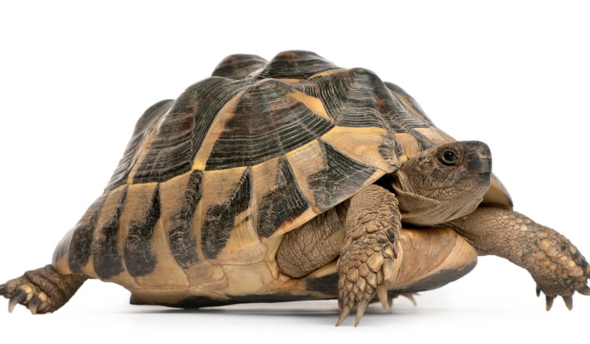 Hai idea dei nomi delle tartarughe?
