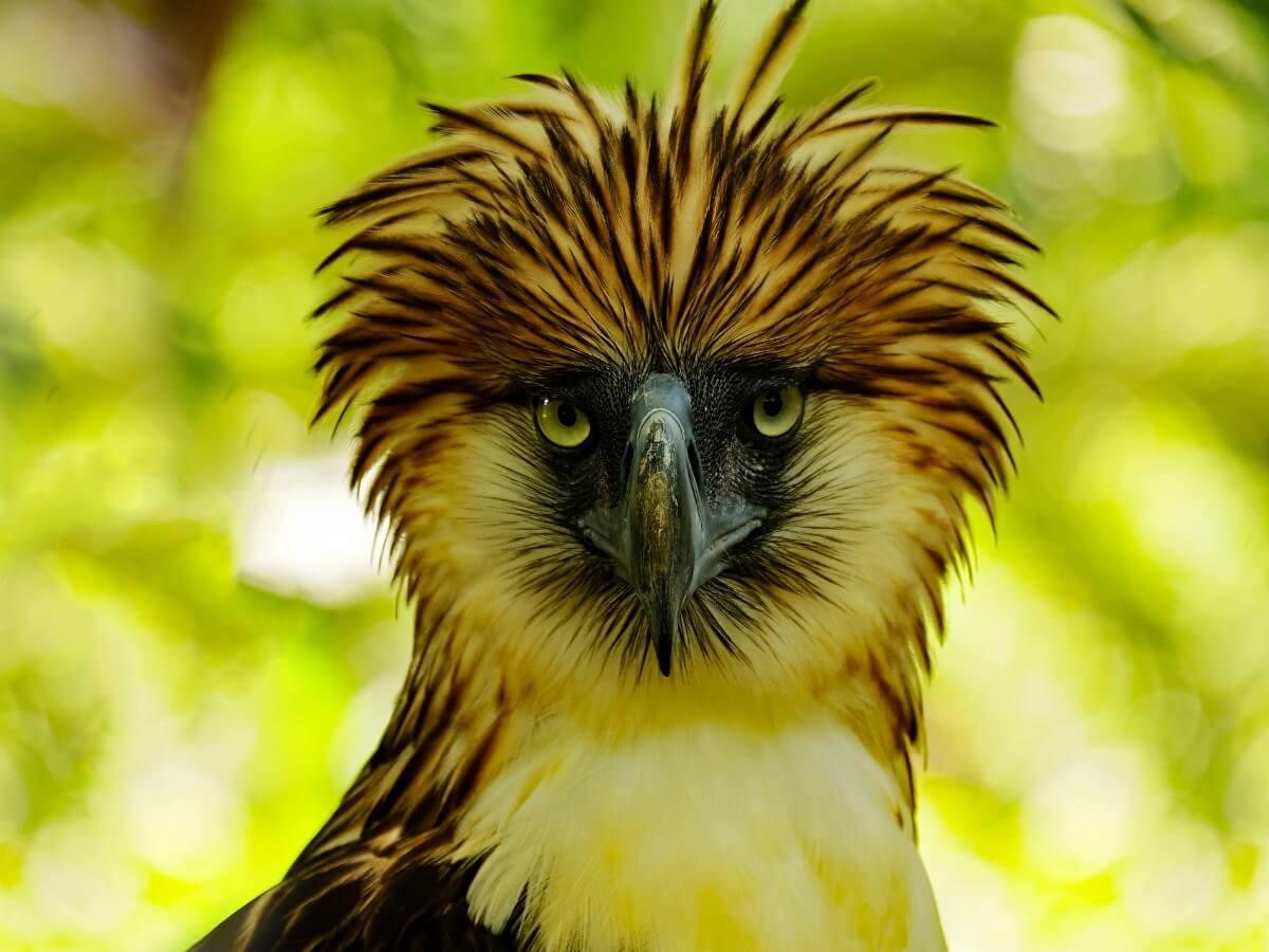 Uma das aves ameaçadas de extinção.
