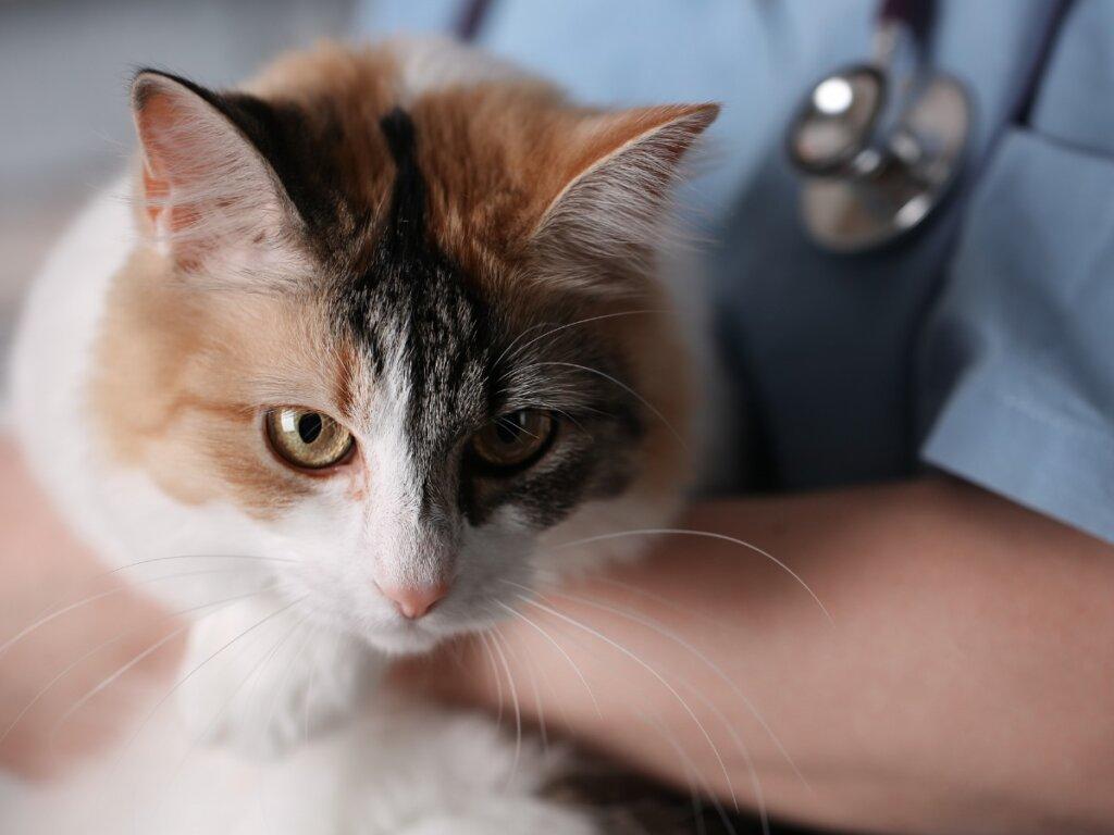 Botiquín y primeros auxilios para un gato: todo lo que debes saber