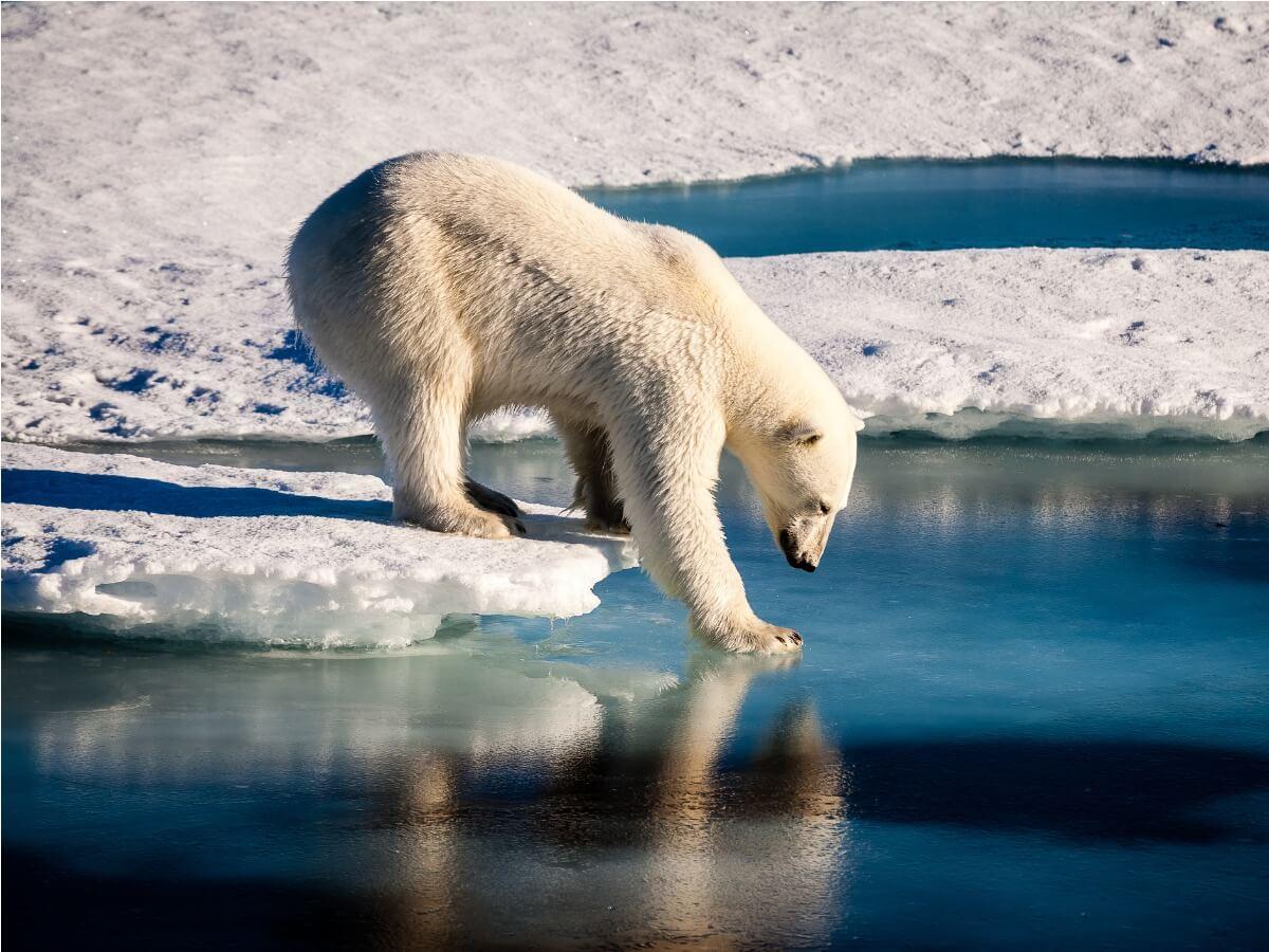 16 animales en peligro de extinción en 2021