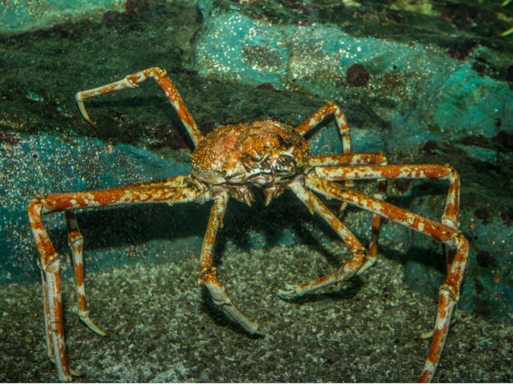 Los cangrejos del mar de Bering: tipos y pesca