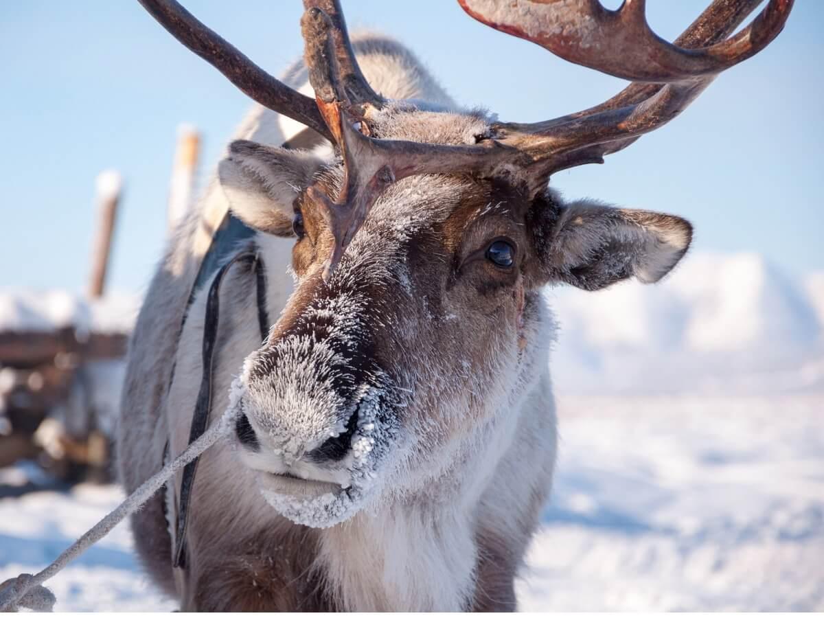 Ett av djuren som påverkas mest av klimatförändringarna.