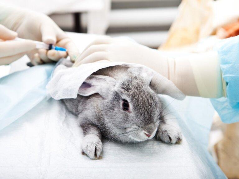 Ivermectina para conejos: todo lo que debes saber