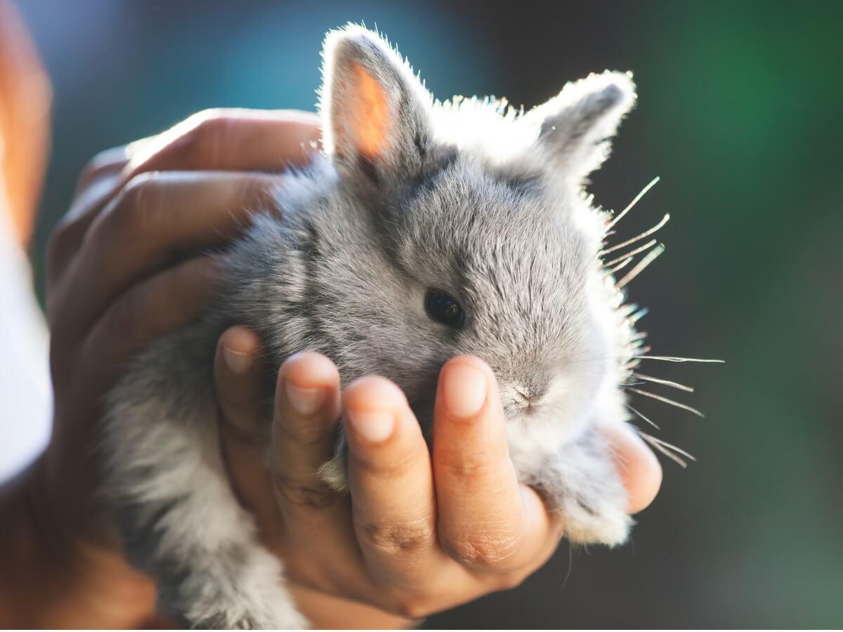 Een konijntje in de handen van zijn baasje