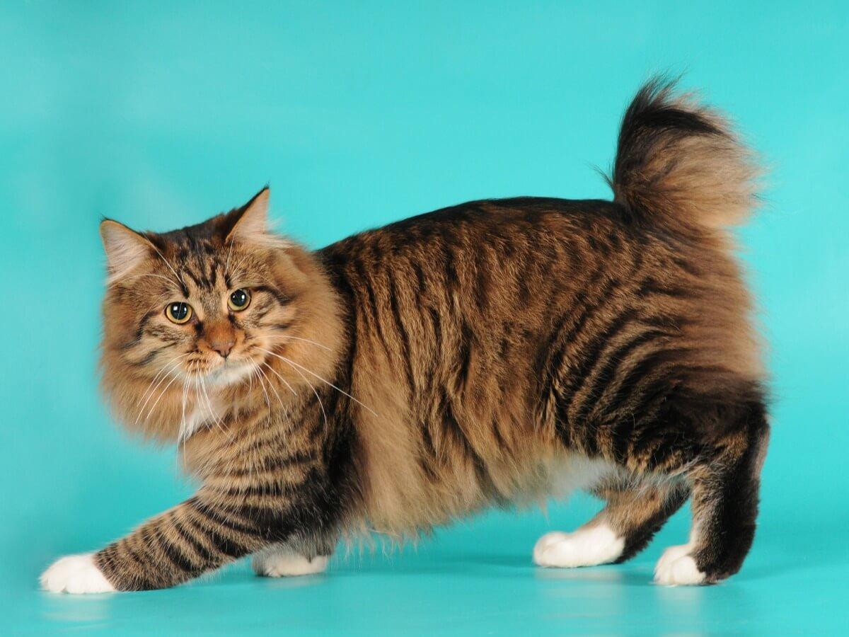 A cat posing.