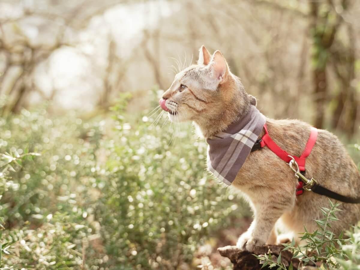 Los consejos para pasear a tu gato son múltiples.