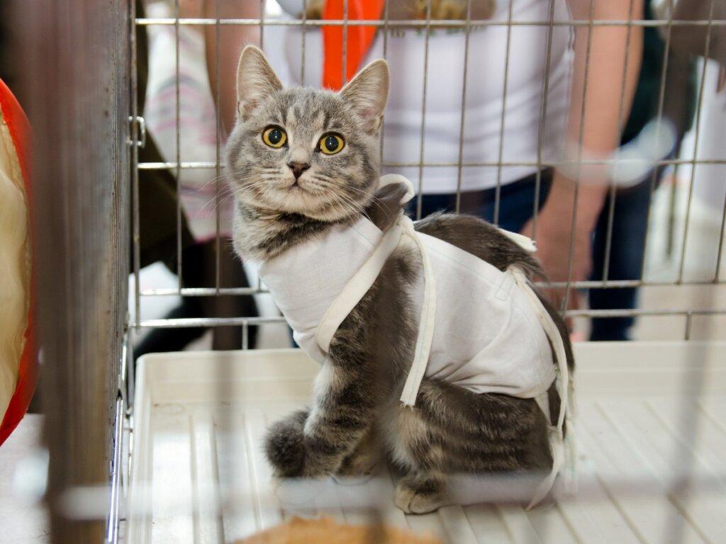 Cuidados de un gato esterilizado