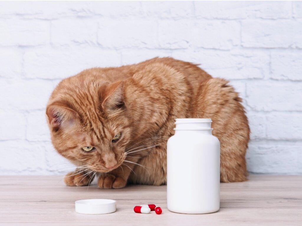 Nolotil para gatos: usos y dosis