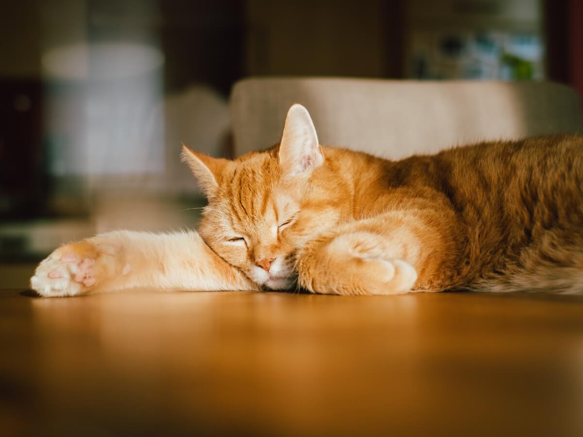 Als katten valeriaan nemen, kunnen ze kalmeren