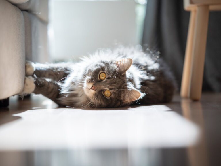 ¿Por qué a los gatos les gusta el sol?