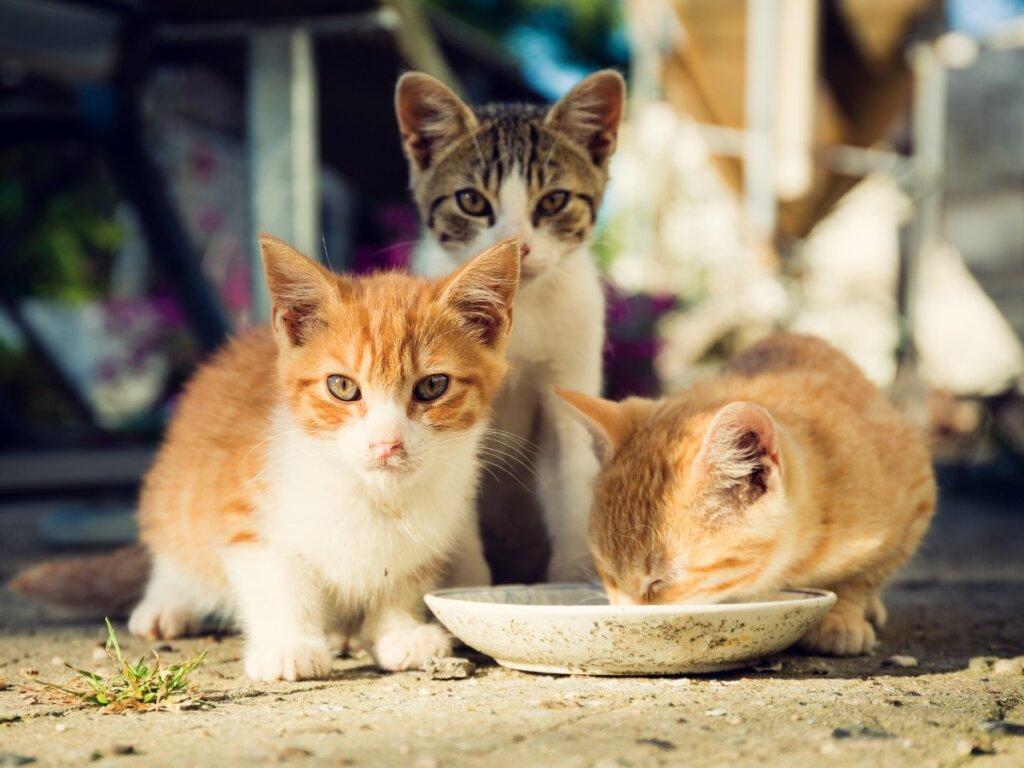 Cuidados para gatitos huérfanos