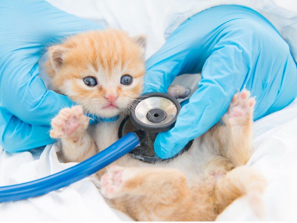 Giardiasis en gatos: síntomas, infección y tratamientos