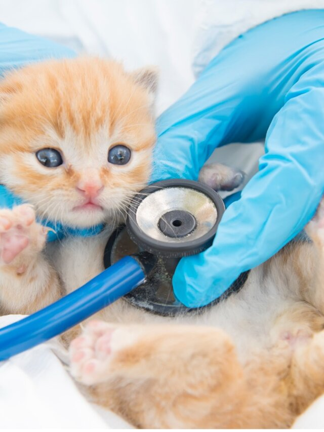 giardia gatos tratamiento)