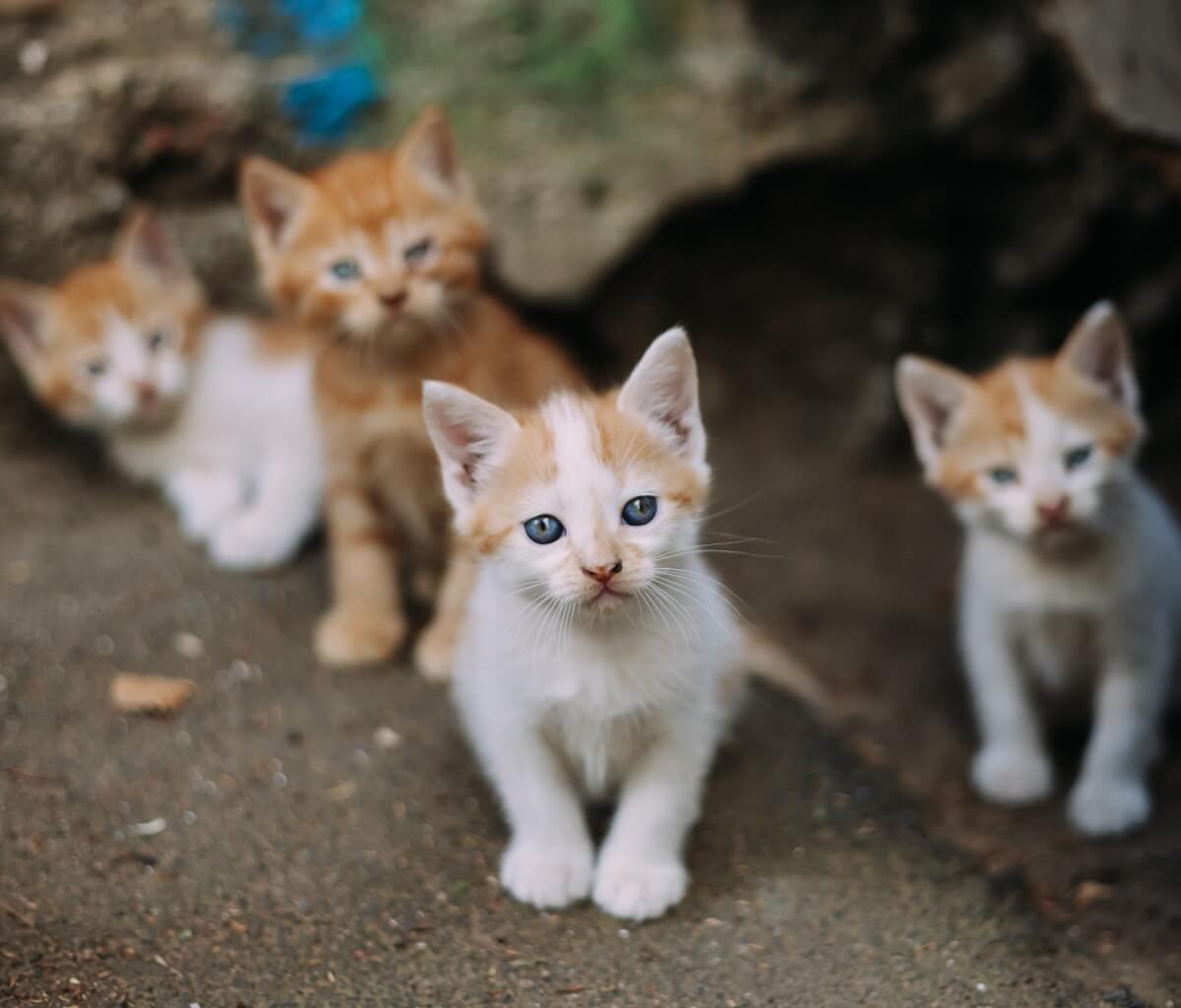 prendersi cura di un gattino orfano