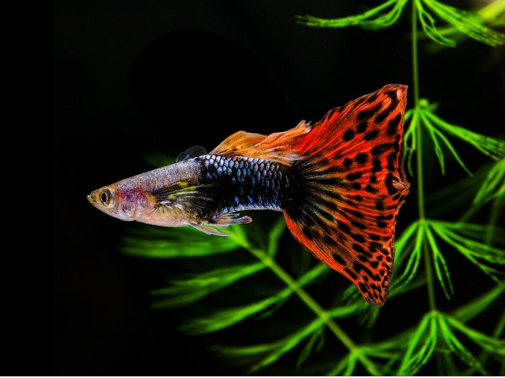 12 peces para principiantes