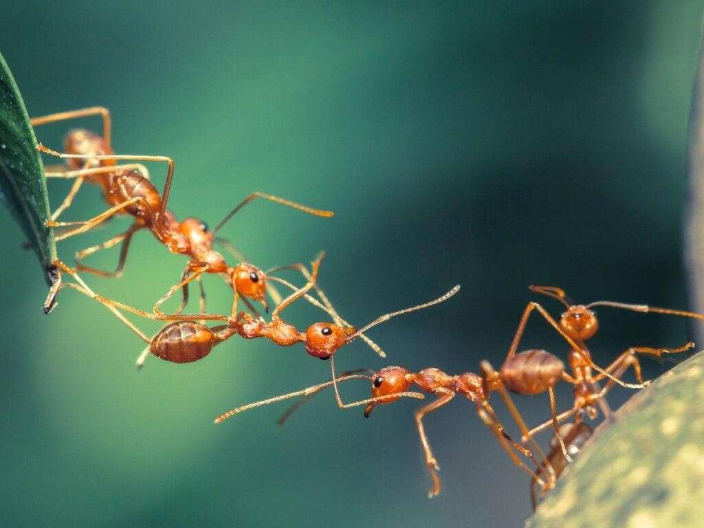12 curiosidades de las hormigas