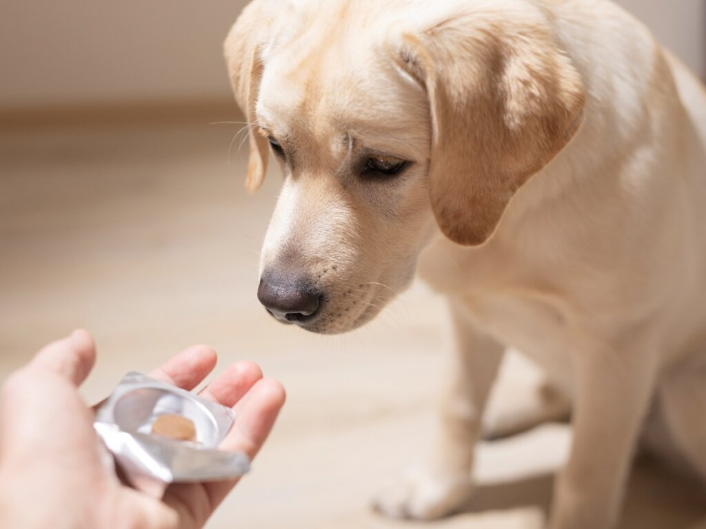 Sucralfato en perros: dosis y contraindicaciones