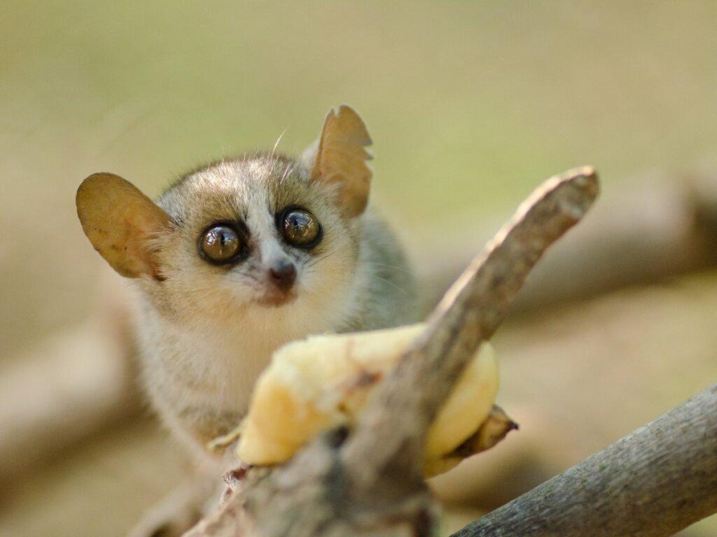 Los 10 mamíferos más pequeños del mundo