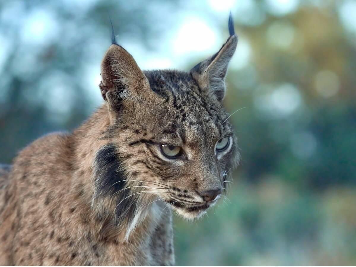 Uno degli animali più belli del mondo.