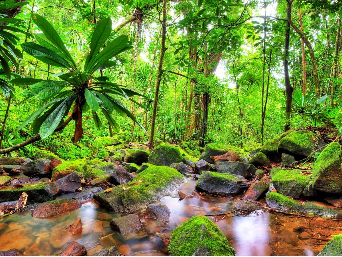 Un ecosistema verde de Madagascar.