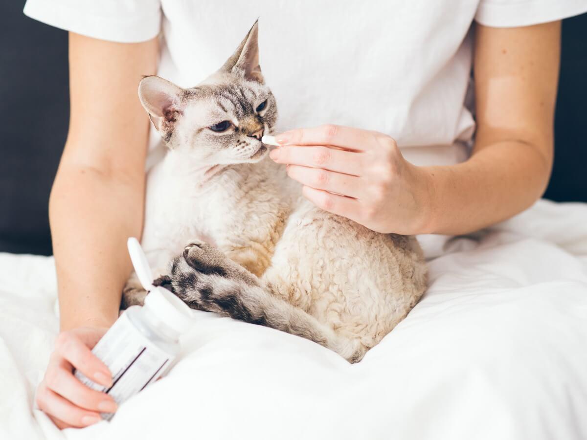 Buprex para gatos: dosis y efectos secundarios