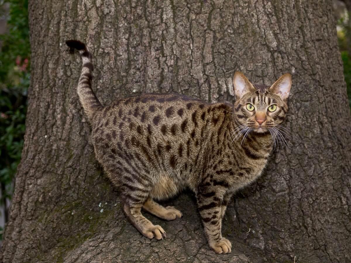 Uno de los gatos atigrados.