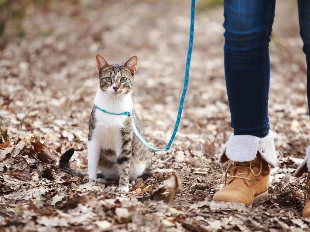 Un gato siendo paseado.