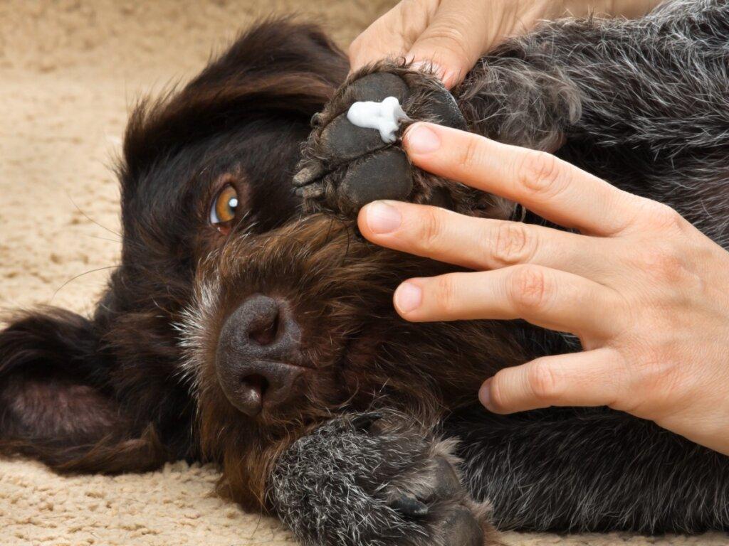 Permetrina para perros: dosis y efectos secundarios