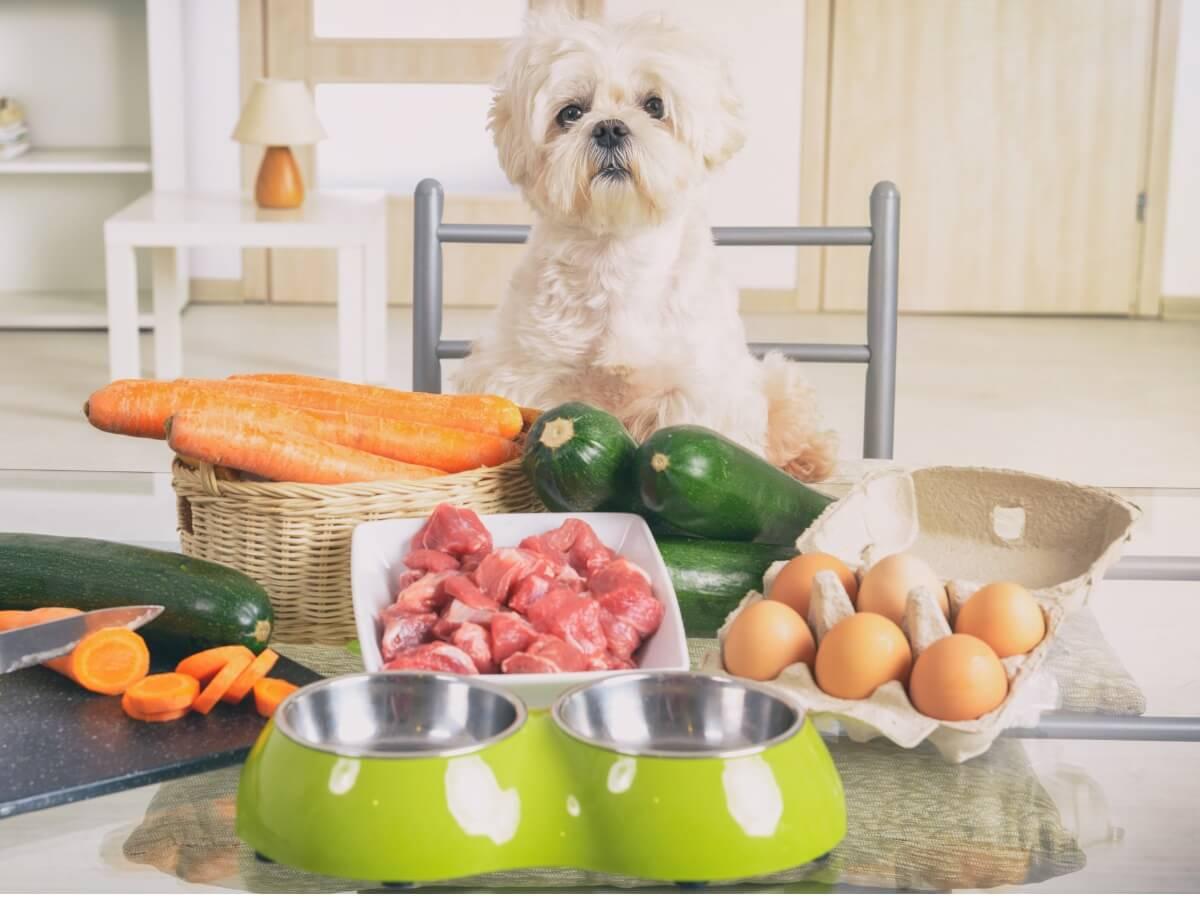 A dog eating raw food.