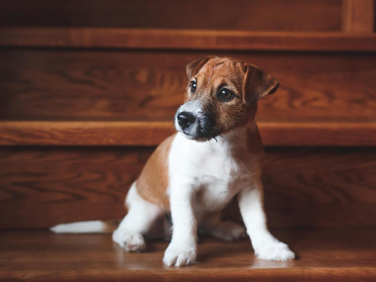 Un chien qui monte les escaliers.