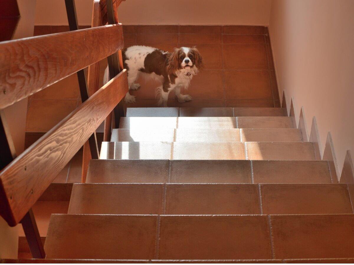 Un chien qui monte des escaliers.
