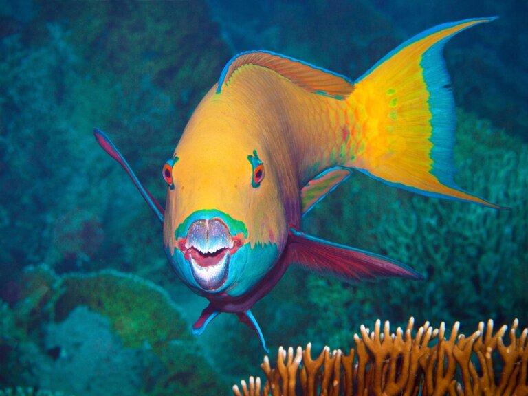 7 curiosidades del pez loro
