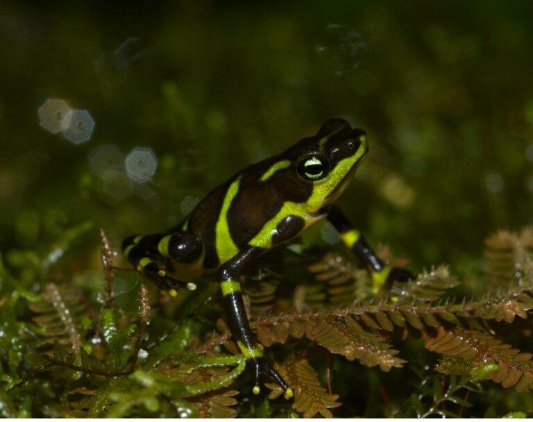 8 tipos de anfibios