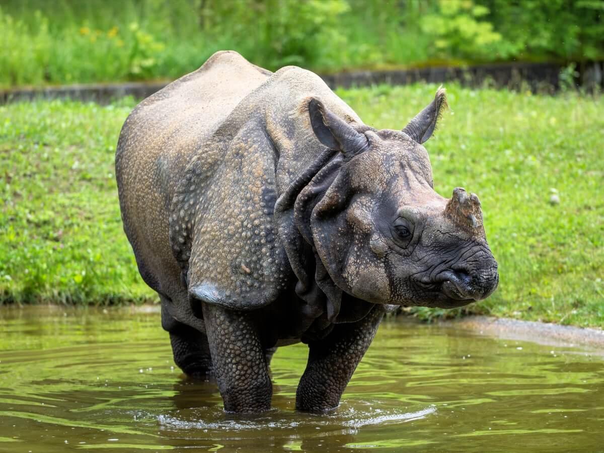 Uno de los animales más peligrosos de Asia.