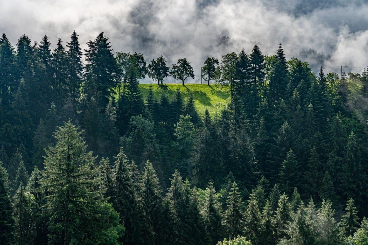 Una panorámica de la Selva Negra.