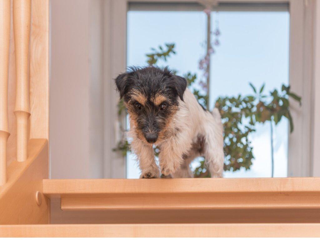 Mi perro tiene miedo a las escaleras: causas y cómo actuar