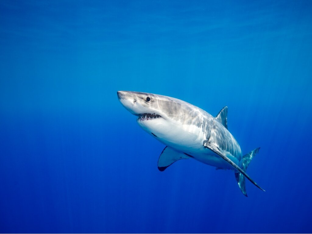 Los tiburones tienen relaciones afectivas duraderas