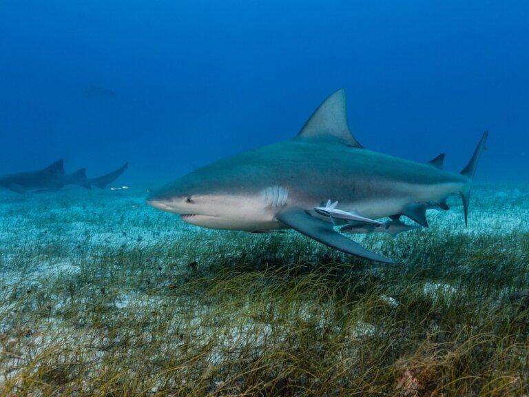 ¿Cómo nacen los tiburones?