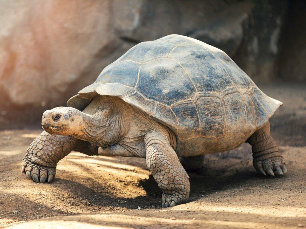 Comportamiento de las tortugas