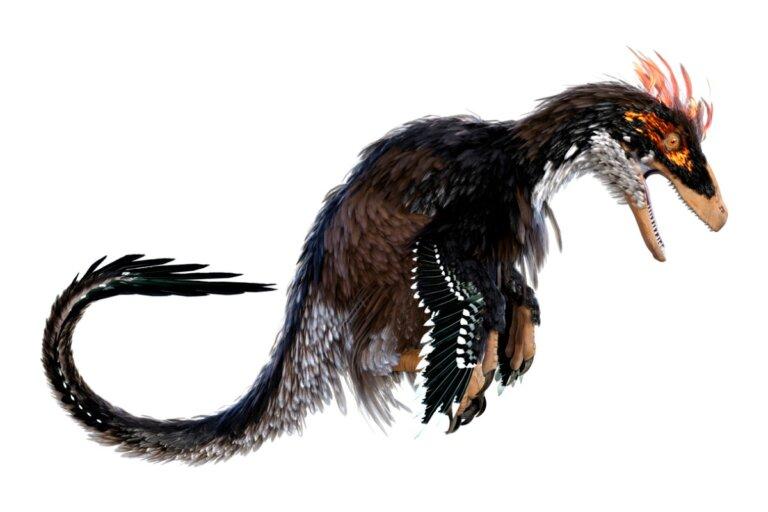 Ubirajara jubatus: el dinosaurio con melena