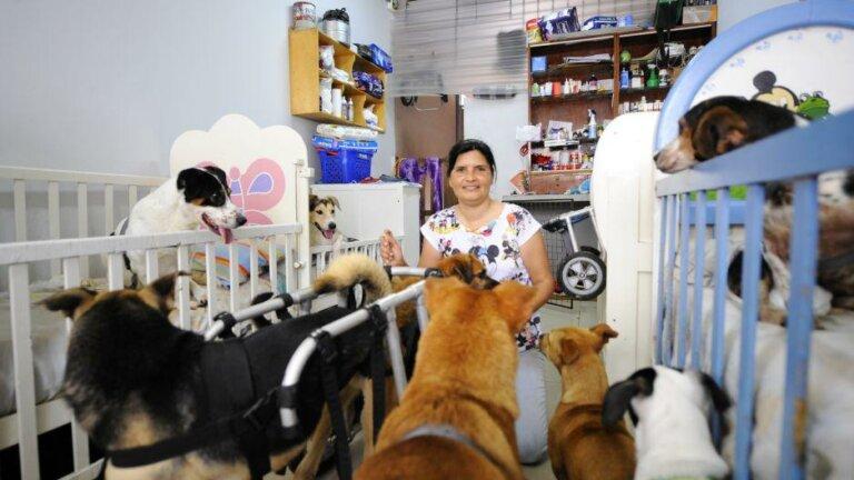 Perros discapacitados: mujer usa cunas, sillas de ruedas y pañales