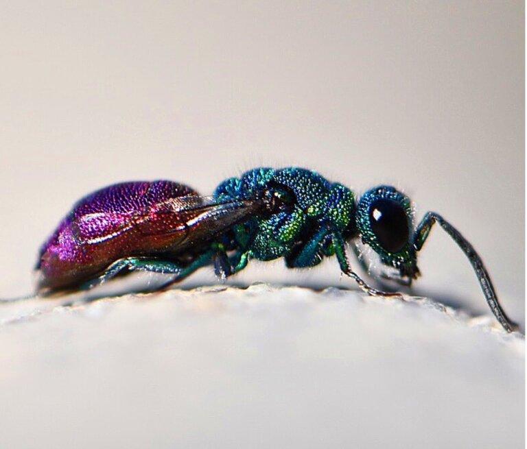 Los 15 insectos más bonitos del mundo