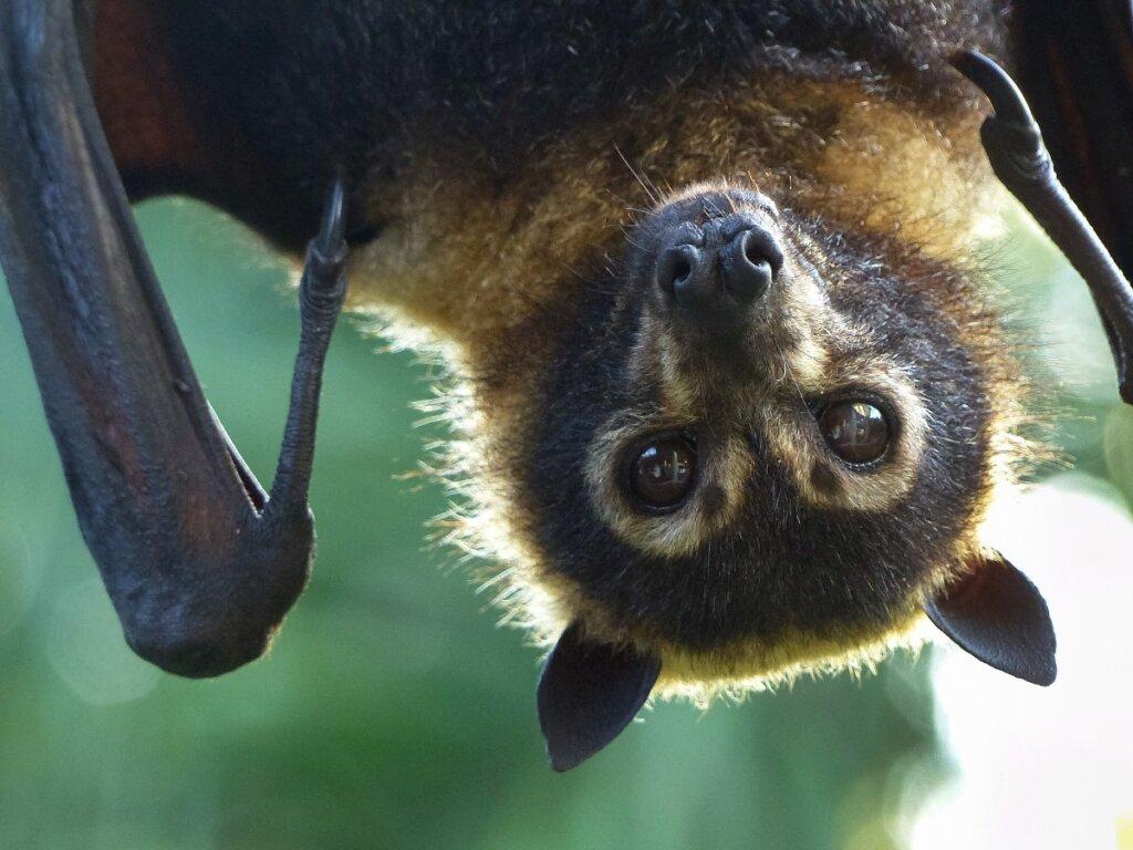 Tipos de murciélagos