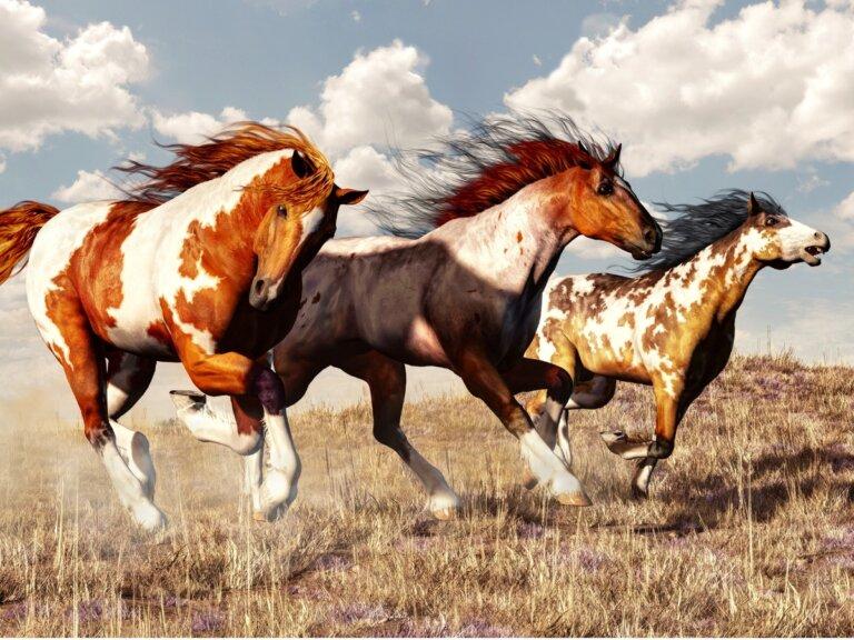 Caballo Mustang: origen y características