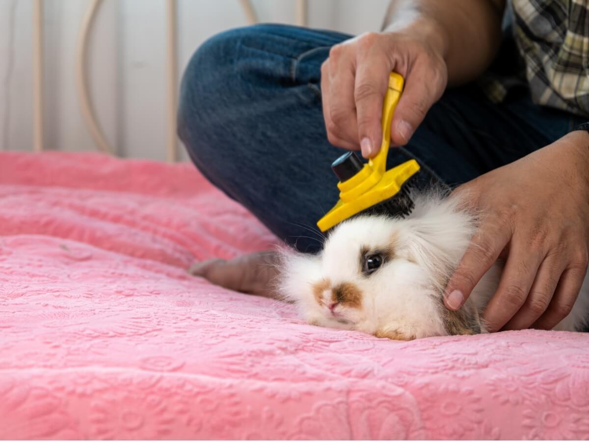 Clases de cepillos para conejos