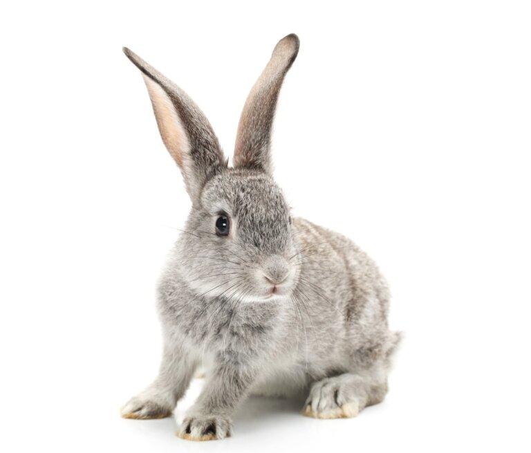 ¿Cómo ven los conejos?
